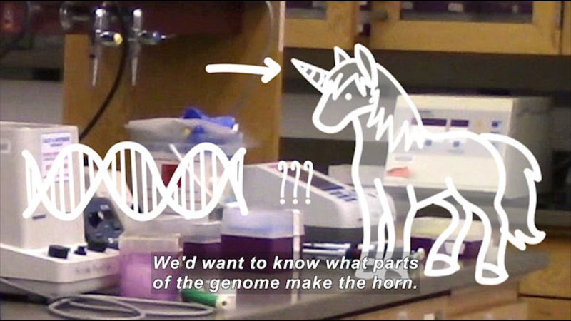 Lab equipment in background with illustration of DNA strand, question marks, and an arrow pointing to the horn on a unicorn. Caption: We'd want to know what parts of the genome make the horn.