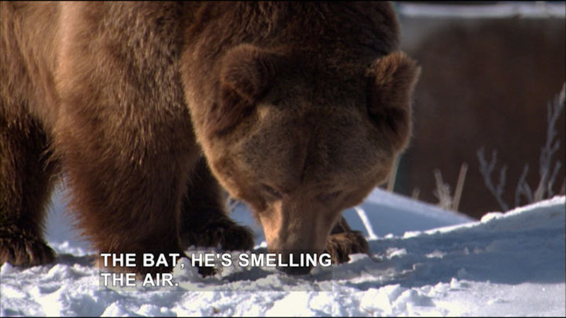 Still image from Expedition Wild: Grizzly Rescue