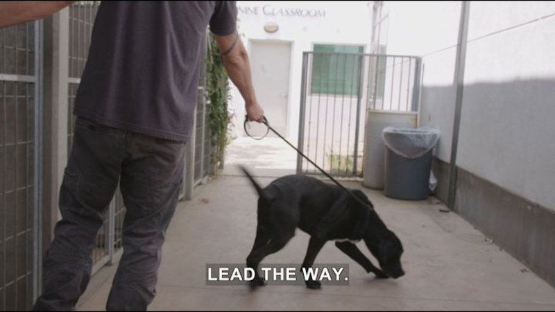 Still image from Lucky Dog: Ollie