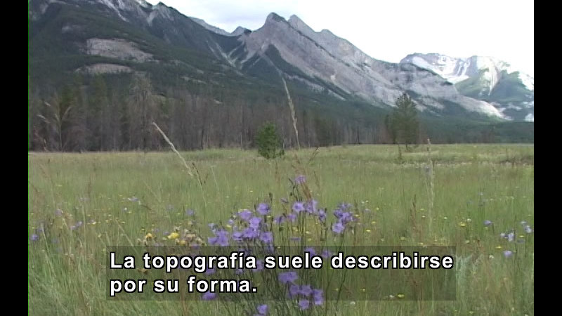 Grass and wildflower covered field surrounded by evergreen trees and snow-capped mountains. Spanish captions.