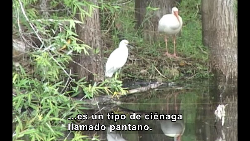 Still image from Food Chains (Spanish)
