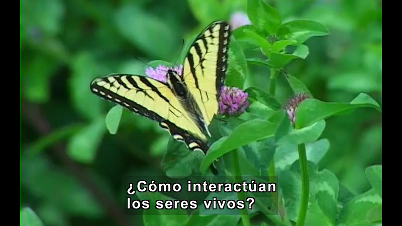 Still image from Interactions of Living Things (Spanish)