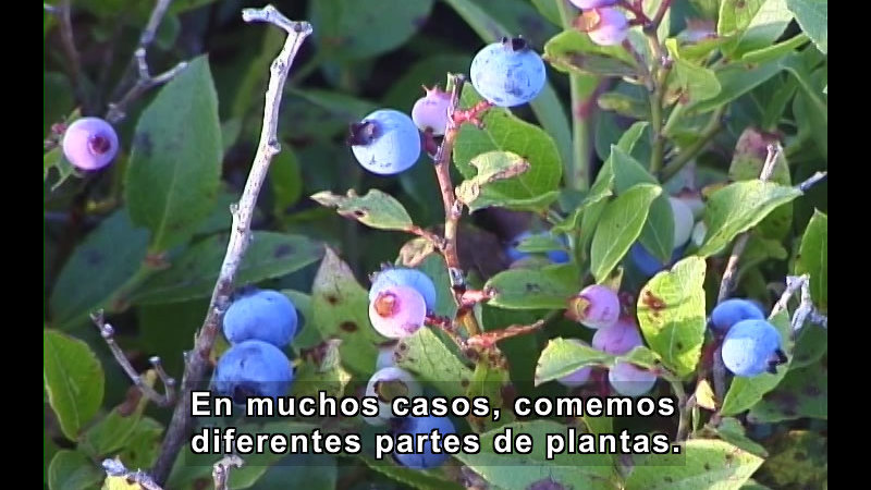 Still image from Plant Parts (Spanish)