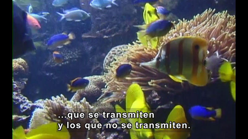 Brightly colored fish swimming around coral. Spanish captions.