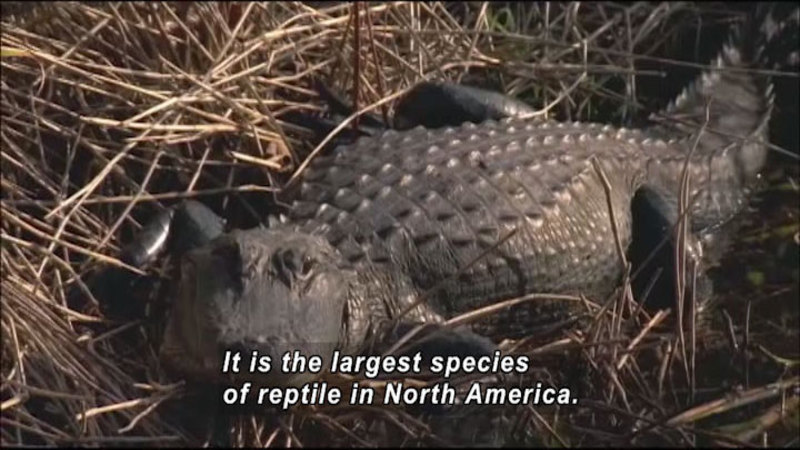 Still image from: The World Heritage: Everglades and Yakushima