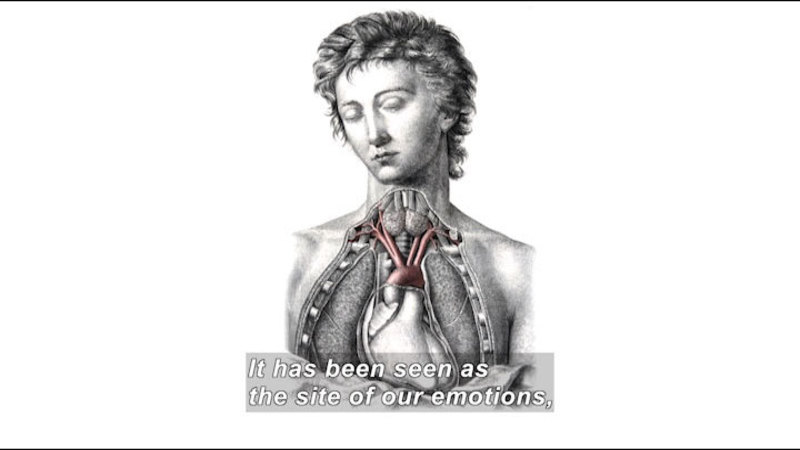Drawing of a human torso and head with a cross section of the chest removed to show the human heart and lungs. Caption: It has been seen as the site of our emotions,