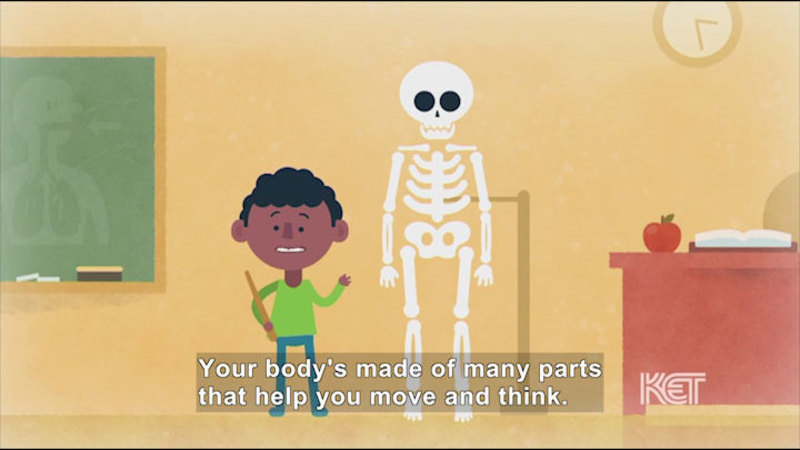Cartoon of a child in a classroom setting standing at the front of the class next to a skeleton. Caption: Your body's made of many parts that help you move and think.