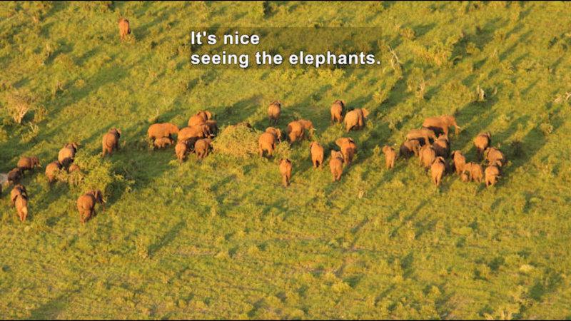A large herd of elephants. Caption: It's nice seeing the elephants.
