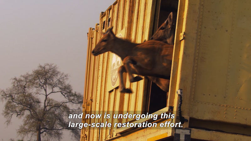 Still image from Think Like a Scientist: Gorongosa