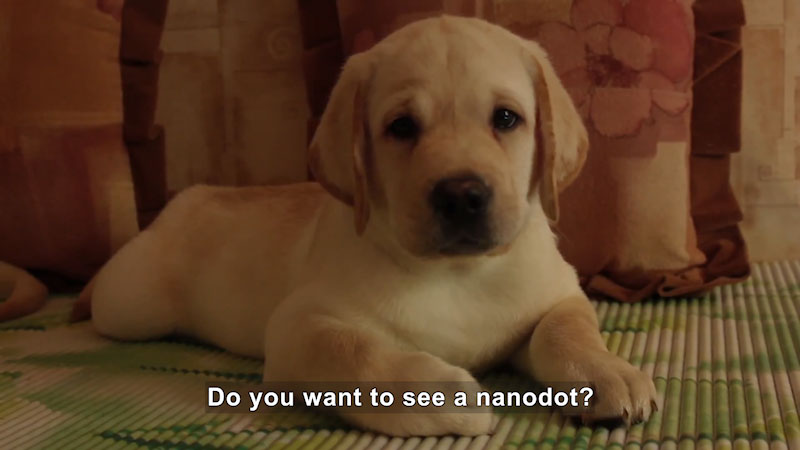 A puppy is seated on a carpet. Caption: Do you want to see a nanodaot?