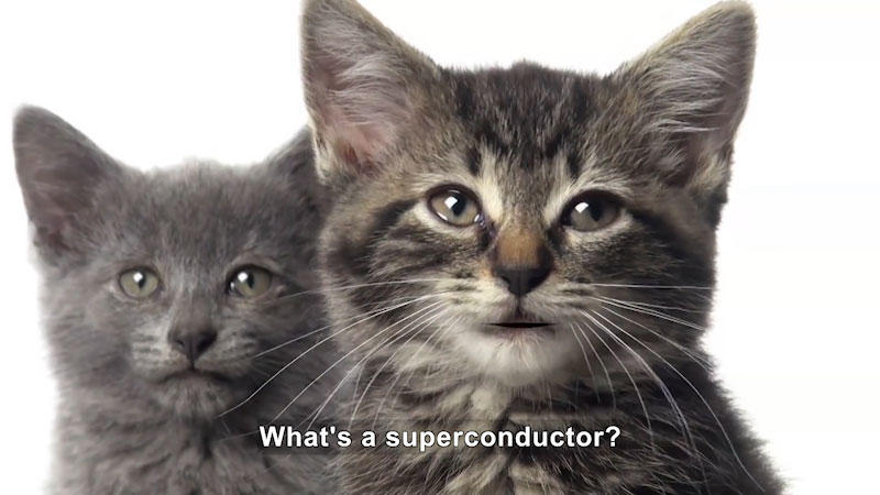 Two black cats look straight. Caption: What's a superconductor?