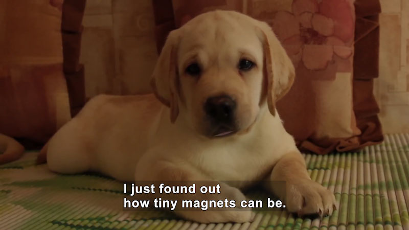 The puppy is seated on the carpet. Caption: I just found out how tiny magnets can be.