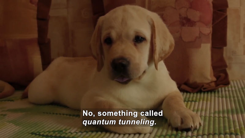 The puppy is seated on the carpet. Caption: No, something called quantum tunneling.