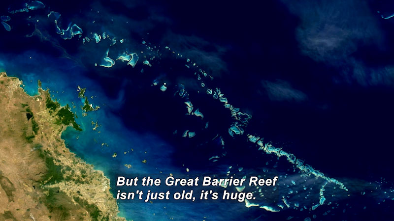 Aerial view of a coastline with a coral reef running parallel to it. Caption: But the Great Barrier Reef isn't just old, it's huge.