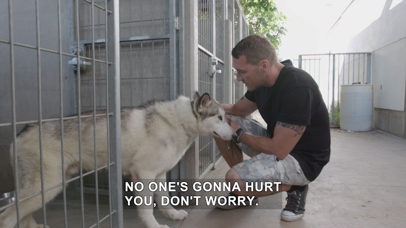 Person kneeling next to an open cage with a dog coming out of it. Caption: No one's gonna hurt you, don't worry.