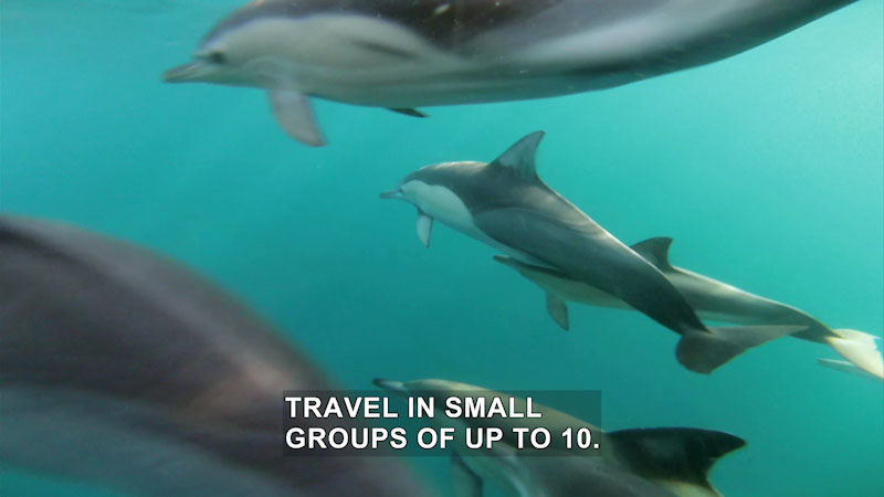 A shiver of baby sharks. Caption: Travel in small groups of up to 10.