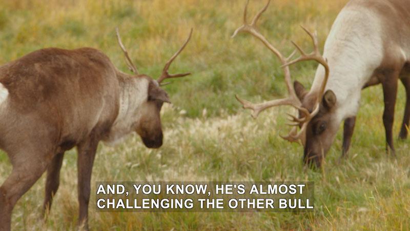 Still image from Wilderness Vet: Dr. Do-A-Lot