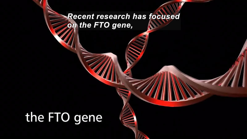 Strings of DNA. Caption: Recent research has focused on the FTO gene,