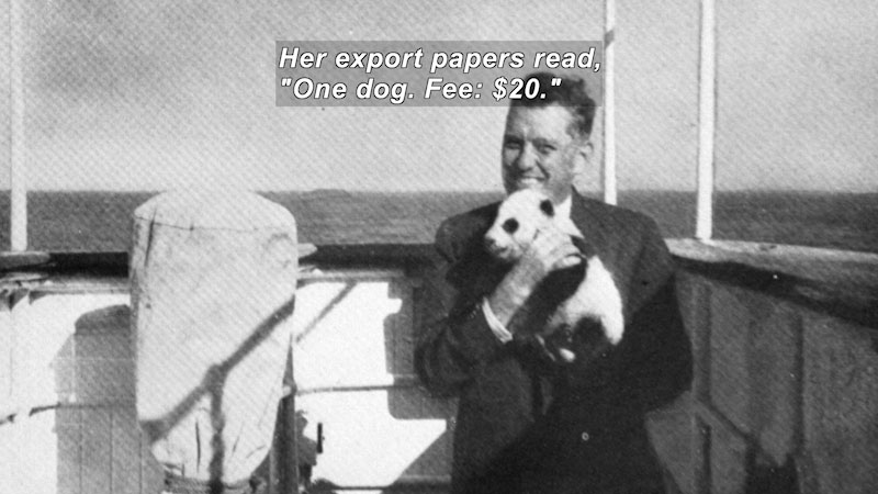 """Black and white photo of a man on a boat holding a baby panda bear. Caption: Her export papers read, """"One dog. Fee: $20."""""""