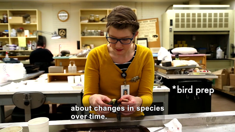 Person in a lab setting holding the body of a bird. Bird prep. Caption: about changes in species over time.