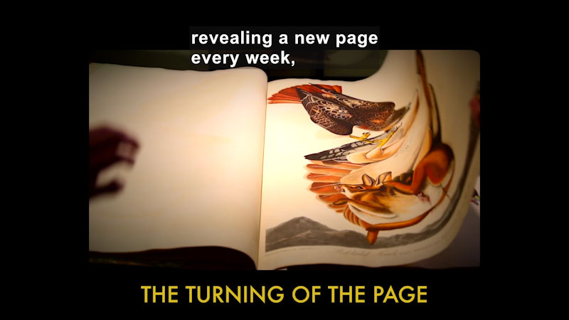 Person turning the page of a book with detailed illustrations. The turning of the page. Caption: revealing a new page every week,