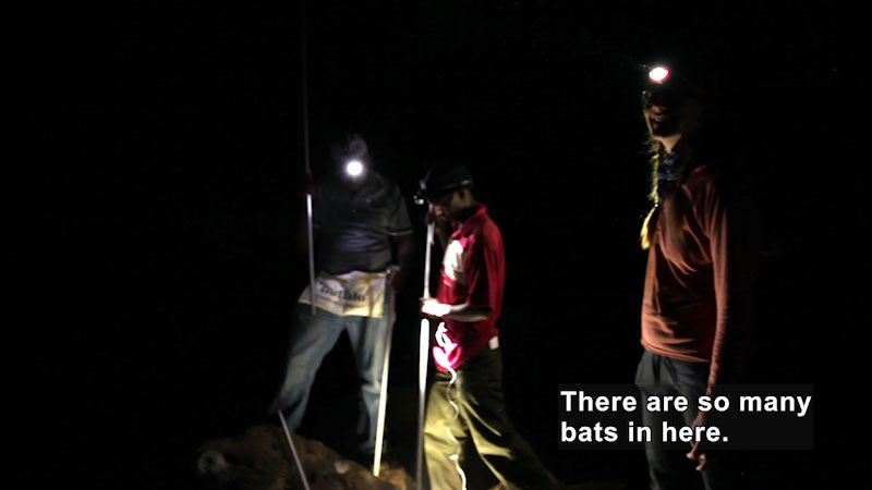 Three people in a dark cave wearing headlamps. Caption: There are so many bats in here.