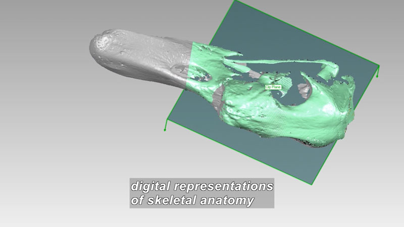 3D computer image of a partially destroyed skeletal structure. Caption: digital representations of skeletal anatomy