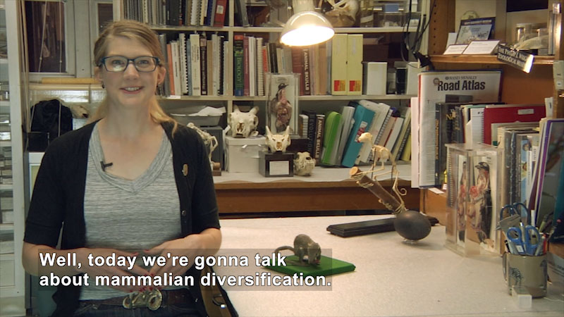 Person speaking. Caption: Well, today we're gonna talk about mammalian diversification.