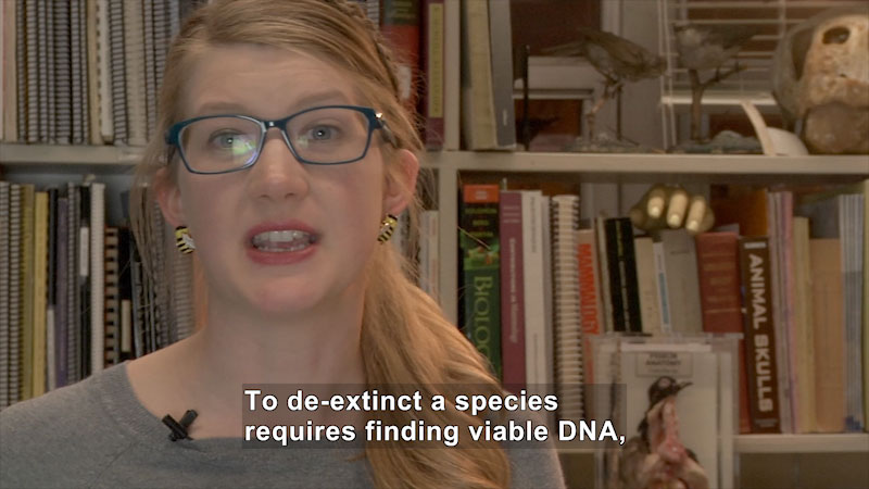 Person speaking. Caption: To de-extinct a species requires finding viable DNA,