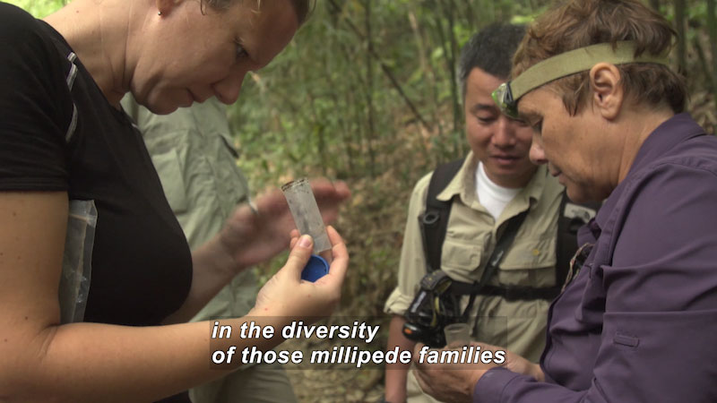 Several people stand surrounded by bamboo and other foliage while a few look inside small vials. Caption: in the diversity of those millipede families