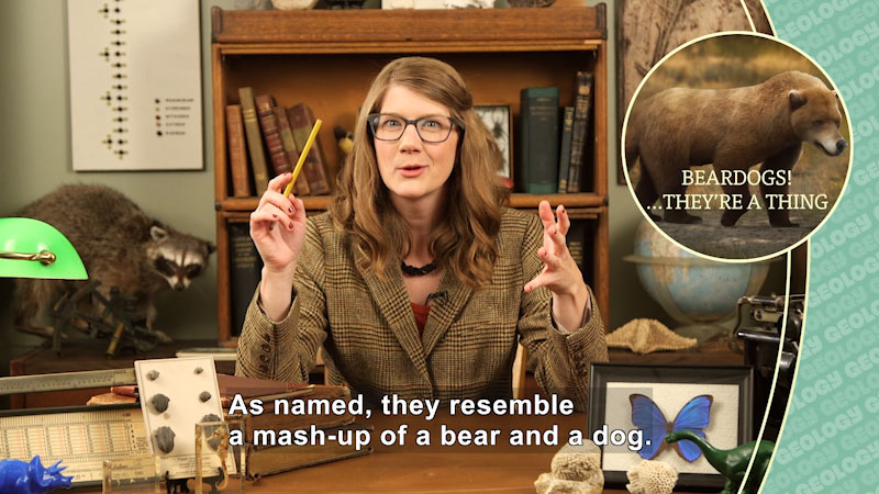 A woman seated at a desk in a suit jacket surrounded by books and preserved specimens. Inset picture: Bear-like creature - Caption: Beardogs! … They're a thing. As named, they resemble a mash-up for a bear and a dog.