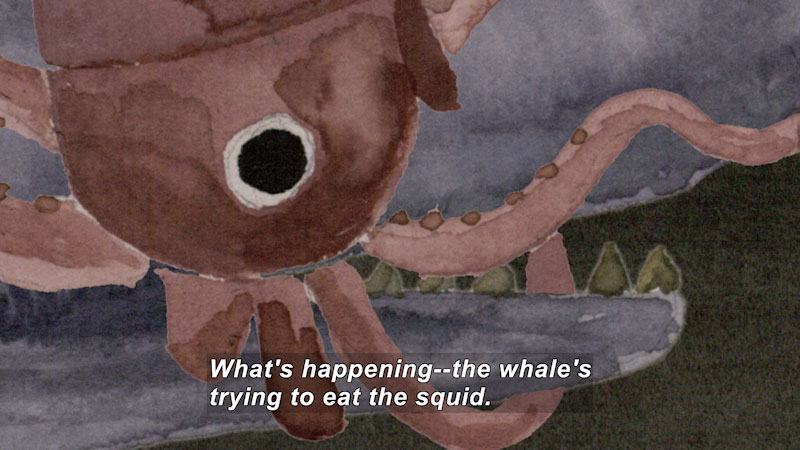 Painting of a squid. Caption: What's happening--the whale's trying to eat the squid.