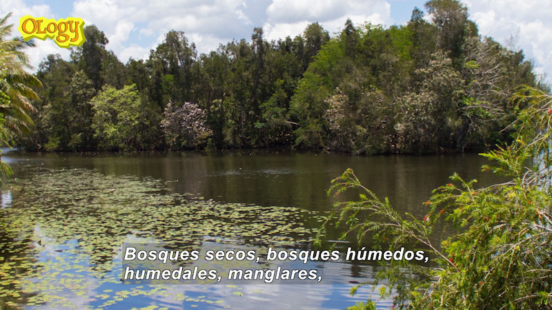 Still image from Ask a Scientist About Cuba's Biodiversity (Spanish)