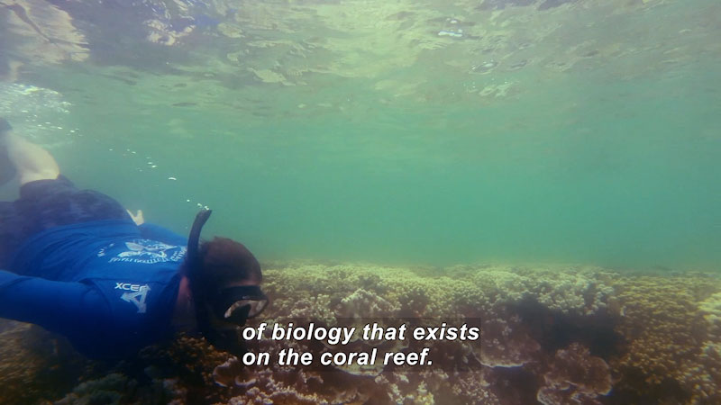 Person swimming over a coral reef in shallow water. Caption: of biology that exists on the coral reef.