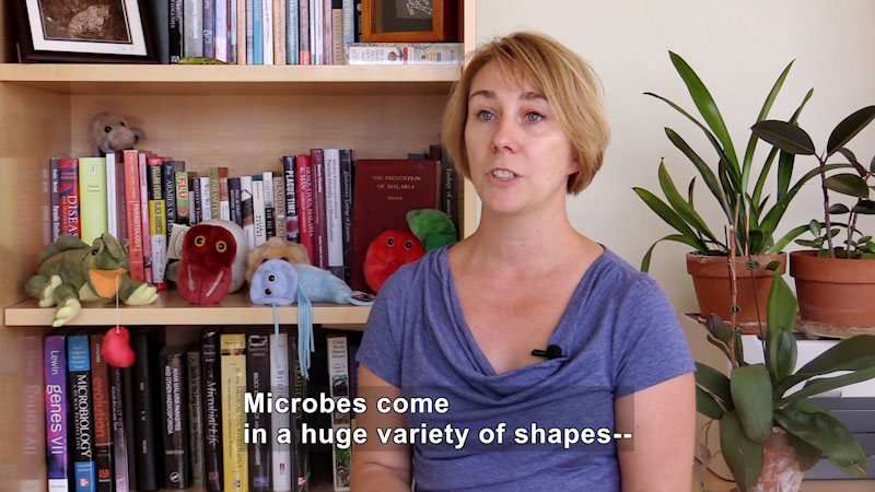 Person sitting in front of a bookcase with books on various scientific subject. Caption: Microbes come in a huge variety of shapes--