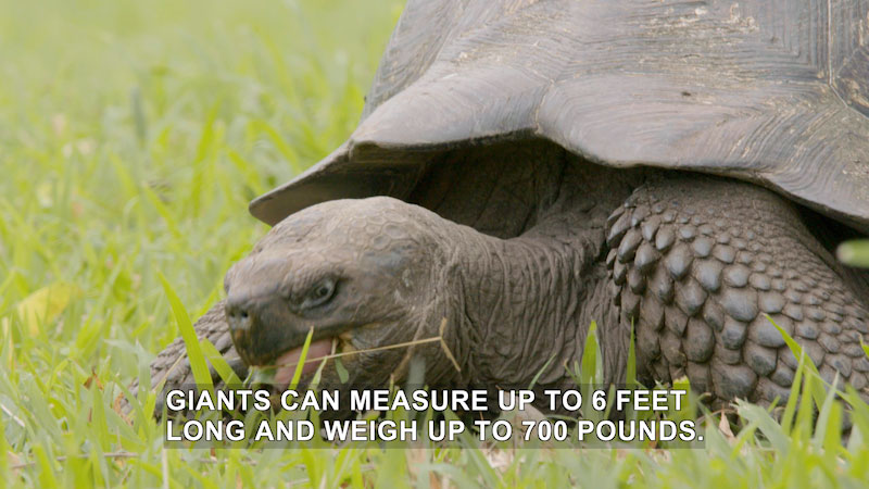 Jack Hanna's Wild Countdown: How in the World