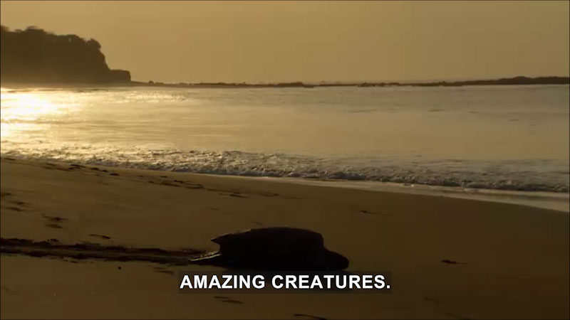 Still image from Jack Hanna's Wild Countdown: Just Beachy