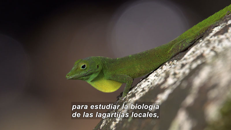 Still image from Lizards Looking for the Way Home (Spanish)