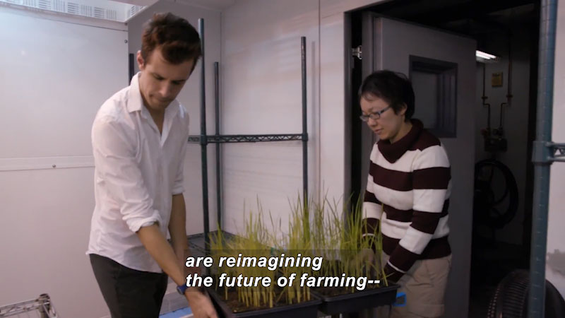 Two people moving a flat of plants. Caption: are reimagining the future of farming --