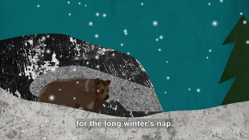 Illustration of a bear in snow. Caption: for the long winter's nap,