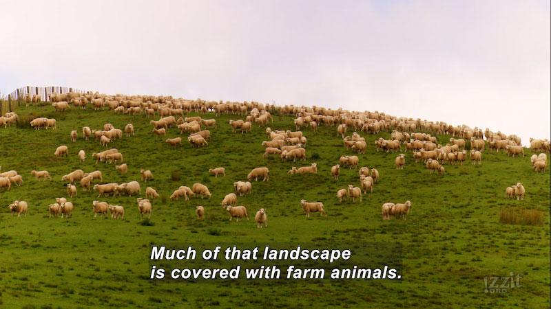 Still image from: No More Skinny Sheep