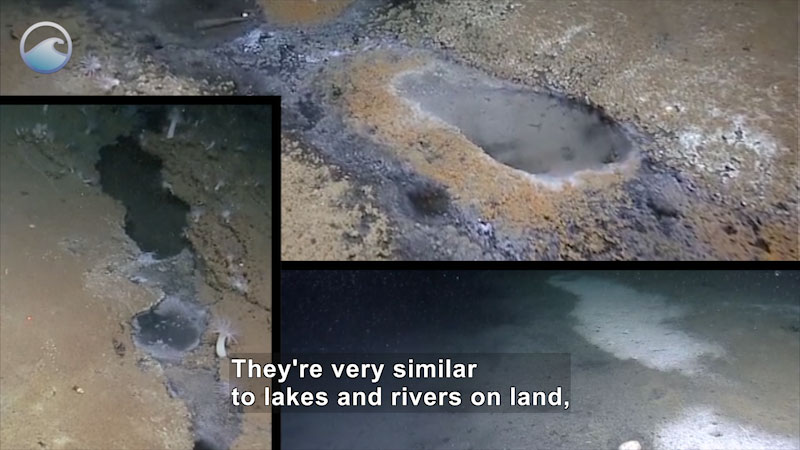 Depressions in the sea floor with noticeably different liquid in them. Caption: They're very similar to lakes and rivers on land.