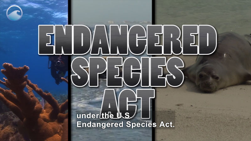 Tryptic of a coral reef, ice shelf, and seal on a beach. Caption:  Endangered Species Act. Caption: under the U.S. Endangered Species Act.