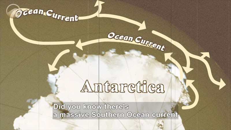 Illustration of Antarctica with a current moving in an oval along one coast with branches moving out towards the rest of the ocean. Caption: Did you know there's a massive Southern Ocean current