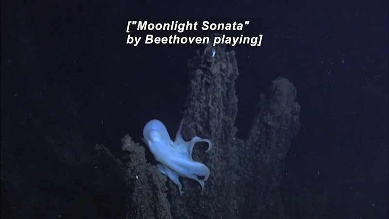 """An all-white octopus perched on a rock protruding from the ocean floor. Caption: [""""Moonlight Sonata"""" by Beethoven playing]"""