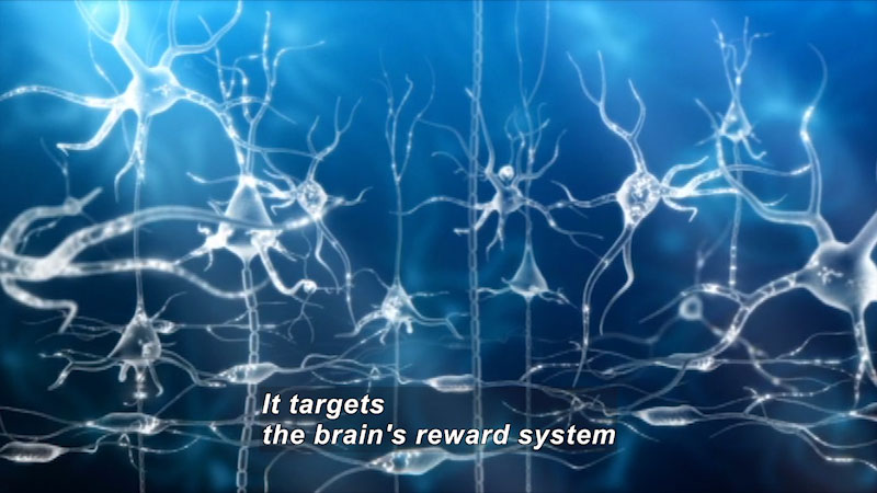 Illustration of nerve cells and the connections between them. Caption: It targets the brain's reward system