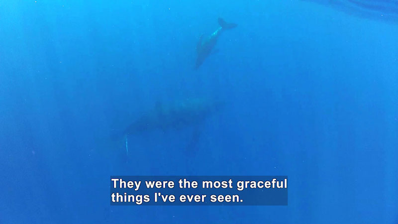 Two humpback whales swim in the deep waters. Caption: They were the most graceful things I've ever seen.