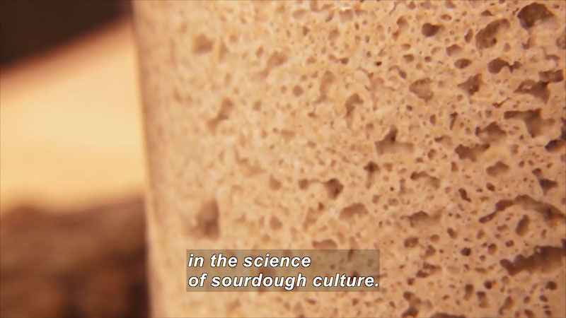 Closeup of sponge-like light brown substance. Caption: in the science of sourdough culture.