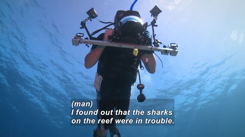 Person in scuba gear with scientific equipment as seen from below. Caption: (man) I found out that the sharks on the reef were in trouble.