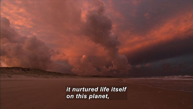 Beach at sunset with waves lapping on the shore. Caption: it nurtured life itself on this planet,